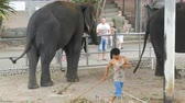 слоновая кость : PATTAYA, THAILAND - DECEMBER 30, 2017: Many different indian elephants walk around valery on crocodile farm in Pattaya Стоковые видеозаписи