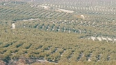 hilly : Top view of the huge olive groves that grow on the dry Spanish soil