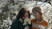 moving image : Portrait of adult middle-aged mother and her adult daughter who inhale smell the scent of flowers of daffodils for Mothers Day against the background of a flowering tree