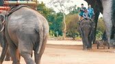 denominou : PATTAYA, THAILAND - DECEMBER 25, 2017: Elephant Village. Different elephants on their back drive tourists.