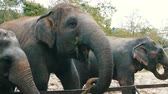 young elephants : Indian elephants eat grass behind a fence at zoo