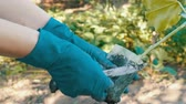 reforestation : Female hands in blue gloves are holding plant with a root ready for planting Stock Footage