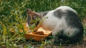 лизать : Little Hungry Kitten Eats in a Green Grass