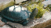 tartaruga : Large black turtle sits in a park near an artificial pond