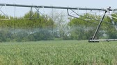 kampanya : Large watering or sprinkler irrigation stand in field and water young plants