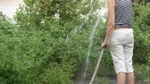 vine plant : Woman is watering plants in her garden from a hose