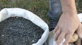 Mens hands of a farmer touching a crop of sunflower seeds. Harvest of sunflower seeds. Sunflower seeds in large white bag close up view Stock Footage
