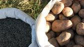 Autumn harvest. Bag of potatoes corn and the sunflower seeds Stock Footage