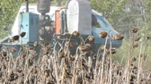 Combine working on sunflower field. Agricultural combine harvester in the field during harvest dry sunflower Stock Footage