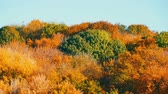 sarma : Picturesque landscape colorful autumn foliage on trees in forest in nature Stok Video