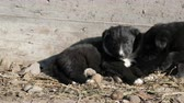 pet friendly : Two cute black and white puppies are lying in sun and playing with each other.