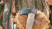 teilen : Ax lying on tree stump on a background of sawn trunks. Firewood for the winter.