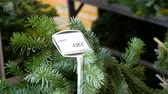 fragilidade : Price tag on the Christmas sale of trees in Europe, Nuremberg, Germany. Sale of fir branches for Christmas on the market Vídeos