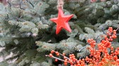 estrellitas : Beautiful Christmas tree toy on red spruce branches in the form of star next to red branches of berries as Christmas decor Archivo de Video