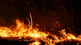 A terrible dangerous wild fire at night in a field. Burning dry straw grass. A large area of nature in flames. Stock Footage