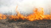 View of terrible dangerous wild high fire in the daytime in the field. Burning dry straw grass. A large area of nature is in flames. Stock Footage
