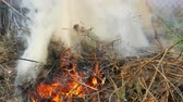 nebel : Burning dry grass or hay that is smoking. The problem of fires and protection of the nature