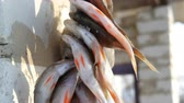 entrails : Caught freshwater fish with red fins hangs and dries on rope outside Stock Footage