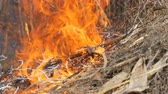 droogte : Burning dry grass and branches close up view. Dangerous wild fire in the nature