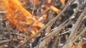 droogte : Burning grass and branches close up view. Dangerous wild fire in the nature