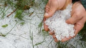 kroupy : Natural disasters. Early spring snowy ice hail on green grass. A man holds a cold hail in hands Dostupné videozáznamy