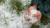 biztosítás : Natural disasters. Early spring snowy ice hail on green grass. A man holds a cold hail in hands Stock mozgókép