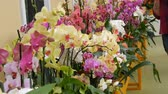 sekans : Colorful orchid flowers on exhibition in greenhouse Stok Video