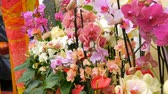 orchidea : Colorful orchid flowers on exhibition in greenhouse Wideo