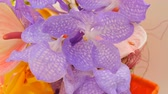 sekans : Colorful purple orchid flowers on exhibition in greenhouse