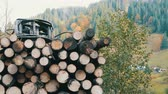 bisarca : A Tree trunks neatly in a row. Transportation of timber on truck on the mountain road. Filmati Stock