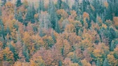 mestiço : Beautiful multi-colored foliage in the Carpathian mountains in early autumn in October. The natural beauty of some the oldest mountains in the world Stock Footage