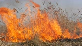 terremoto : View of terrible dangerous wild high fire in the daytime in the field. Burning dry straw grass. A large area of nature is in flames. Archivo de Video