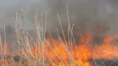 droogte : View of terrible dangerous wild high fire in the daytime in the field. Burning dry straw grass. A large area of nature is in flames. Stockvideo