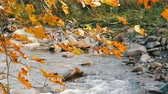 rocky mountains : Autumn mountain stream flows through large stones in Carpathian mountains, Ukraine