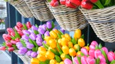Нидерланды : Wooden souvenirs multicolored tulips world famous symbol of the Holland