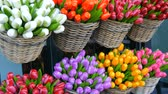 тюльпаны : Wooden souvenirs multicolored tulips world famous symbol of the Holland