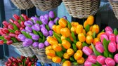 pays bas : Wooden souvenirs multicolored tulips world famous symbol of the Holland
