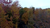 moribundo : Aerial Drone - Fly Over Bare Trees Towards Full Color Trees in Fall in Vermont.