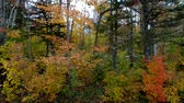 kırsal bölge : Pan Across Forest With Colorful Trees in Fall in Chittenden, Vermont. Stok Video