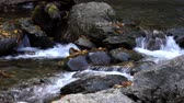 brook : Water Flowing Over Rocks With Fallen Leaves In Stream.