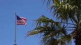esfarrapado : Tattered American Flag Waves Slowly in Breeze behind a palm tree