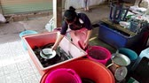 výživný : Chiang Saen, Thailand - 2019-03-10 - Woman Uses Dish To Move Live Catfish Between Bins.