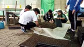 jardinier : Mae Saiong. Thailand - 2019-03-11 - Volunteers Fill Greenhouse Flower Beds With Peat - Low. Vidéos Libres De Droits