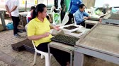jardinier : Mae Saiong. Thailand - 2019-03-11 - Woman Transplants Seedling To Greenhouse Tray.