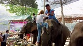 ziyafet : Chiang Rae, Thailand - 2019-03-13 - Elephant Feast Festival - Girl in Stripes Climbs on Elephant Head. Stok Video