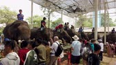 urvat : Chiang Rae, Thailand - 2019-03-13 - Elephant Feast Festival - View of People in Line Feeding Elephants. Dostupné videozáznamy