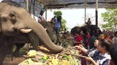 urvat : Chiang Rae, Thailand - 2019-03-13 - Elephant Feast Festival - Girls Feed Elephants Sugar Cane.