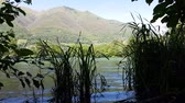Water grass moved by slow waves on the shore of a lake in the mountains Dostupné videozáznamy