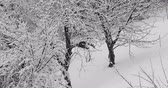 Leafless tree branches covered in white snow during winter snowstorm Dostupné videozáznamy
