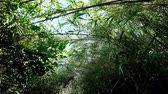 cana : Slow walk through bushy path, glide shot, exotic plants around. First person view, clear ground pathway.